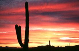 Biomes Of The World Teachersfirst Desert