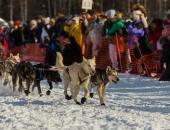 Learn About the Iditarod image